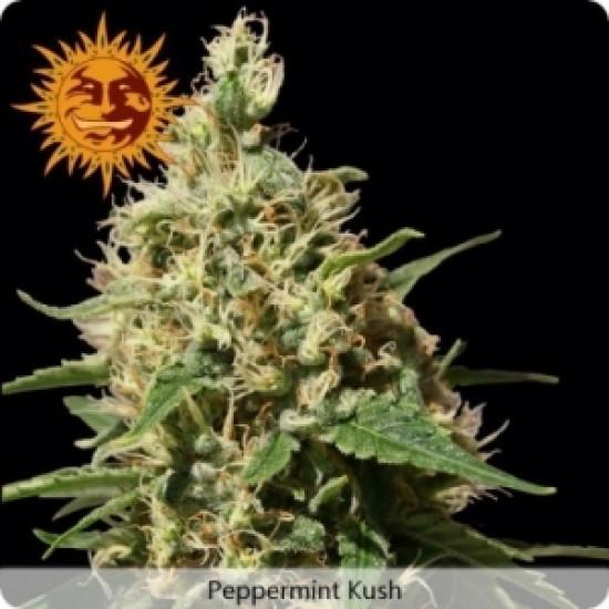 Peppermint kush Feminised